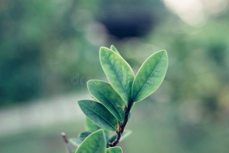 特写镜头绿色叶子自然视图  免版税库存图片
