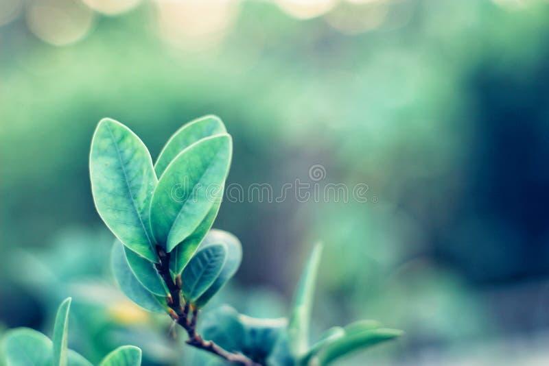 特写镜头绿色叶子自然视图  免版税库存照片