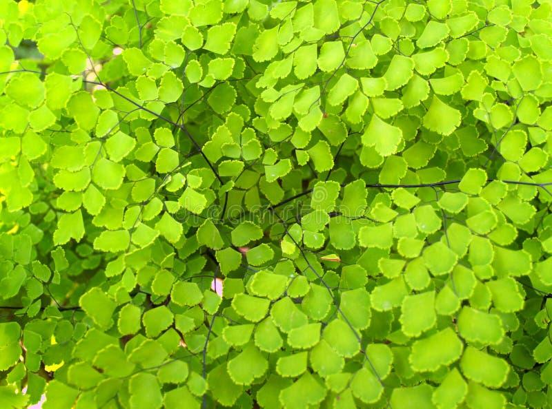 特写镜头绿色植物 库存图片