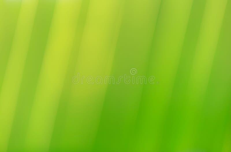 特写镜头绿色椰子叶子自然视图  向量例证