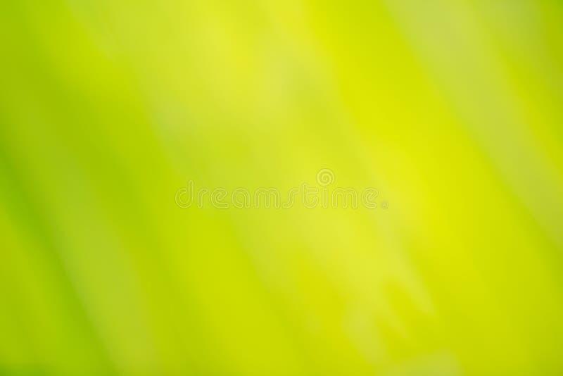 特写镜头绿色椰子叶子自然视图  皇族释放例证