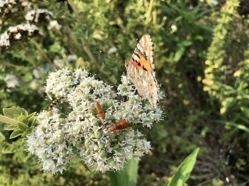 特写镜头美丽的蝴蝶坐花 免版税图库摄影