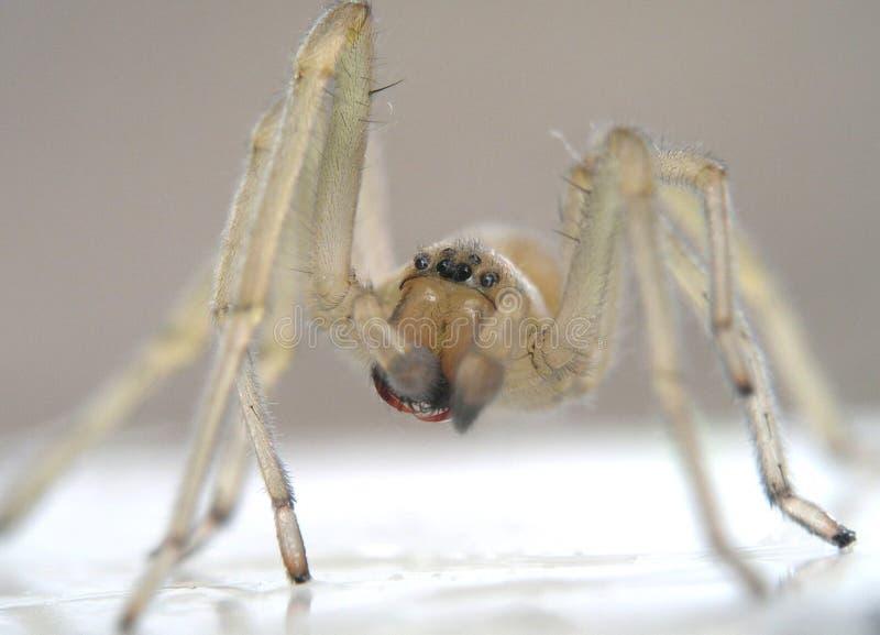 特写镜头蜘蛛 库存照片