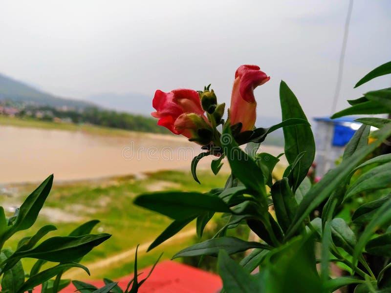 特写镜头被射击橙色花和河在背景中 河水将泥泞充斥昨晚 库存照片