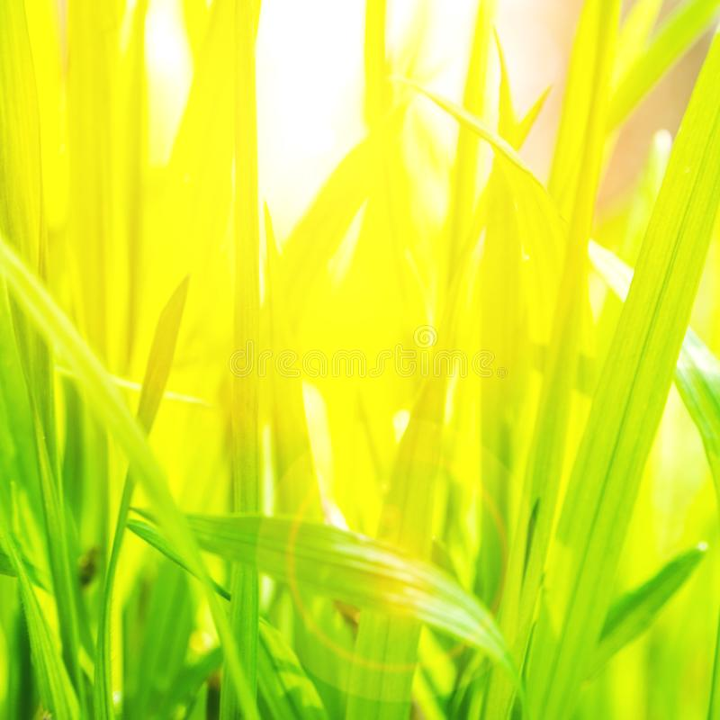 特写镜头观点的在绿色和黄色背景的绿草 库存照片