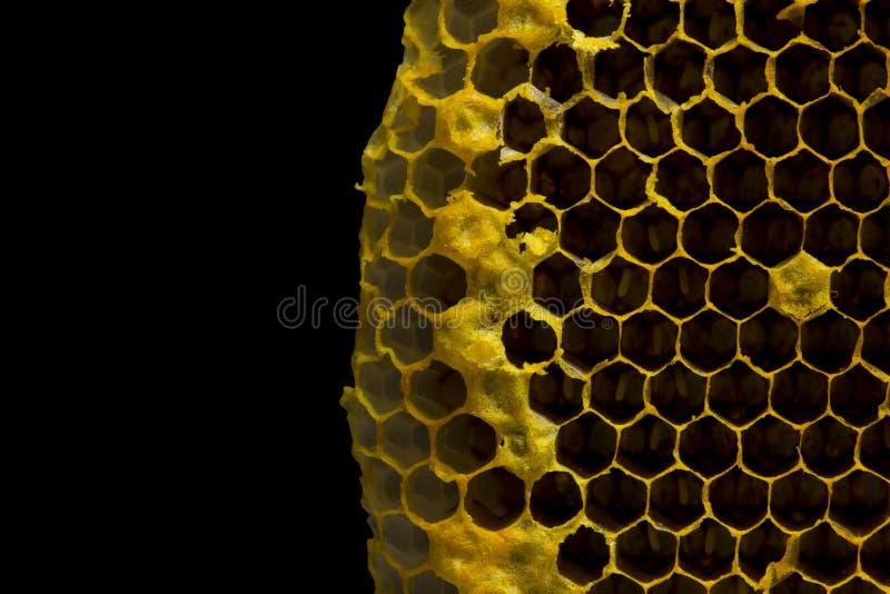 特写镜头观点的在蜂窝,蜂蜜细胞patte的工作的蜂 免版税库存图片
