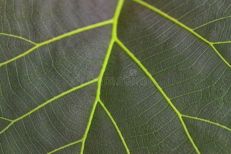 特写镜头视图,顶视图,绿色叶子,背景的纤维 免版税库存照片
