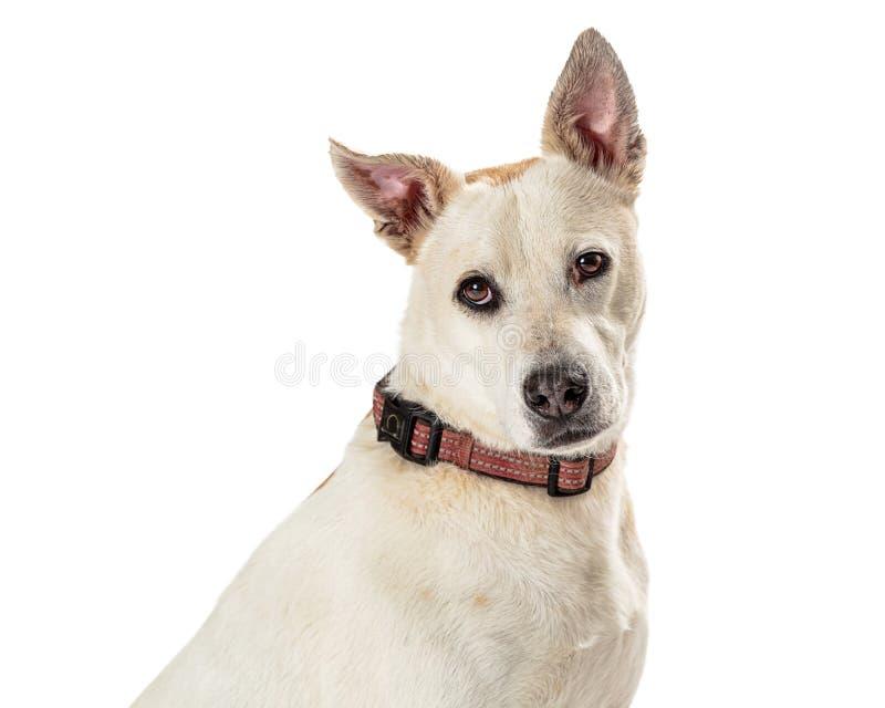 特写镜头逗人喜爱的友好的大白色狗 免版税库存图片
