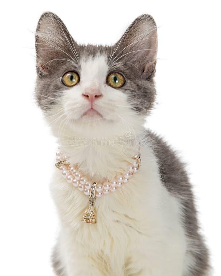 特写镜头逗人喜爱的小猫佩带的珍珠项链 库存图片