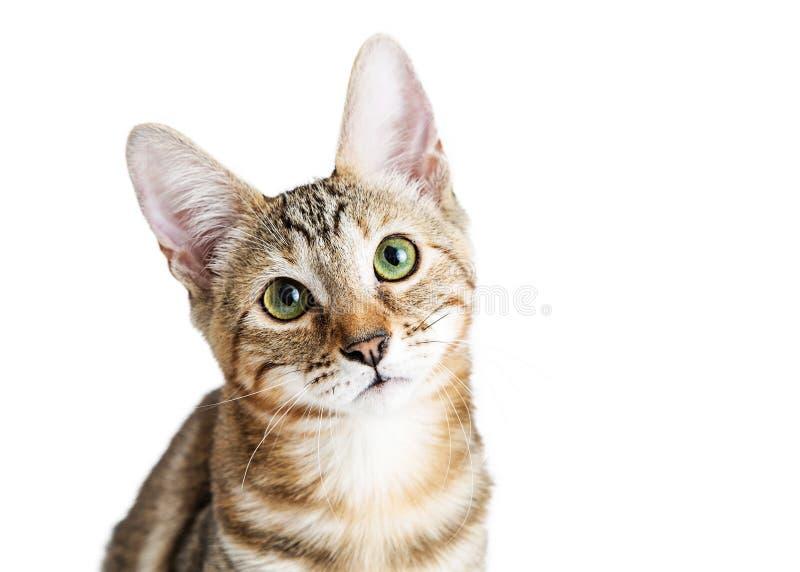 特写镜头逗人喜爱的小猫面孔 免版税库存图片