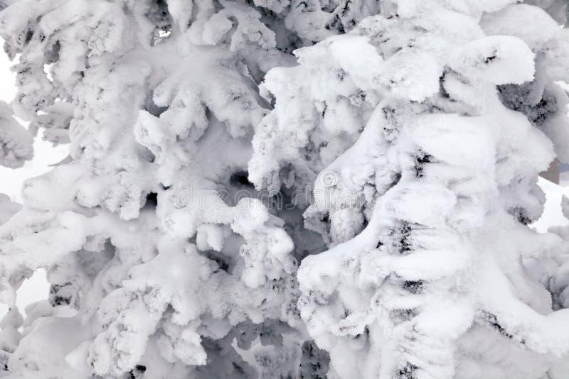 特写镜头风景宏观视图积雪覆盖的树 概念瑞士阿尔卑斯山脉 免版税库存图片