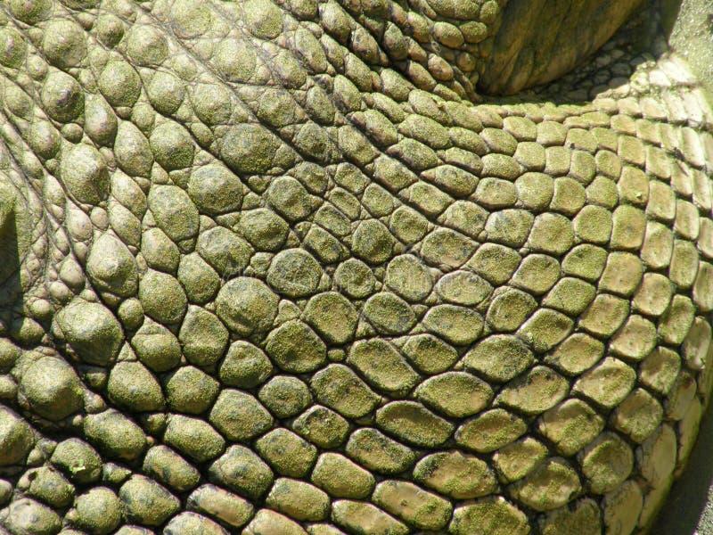 特写镜头鳄鱼皮肤 免版税图库摄影