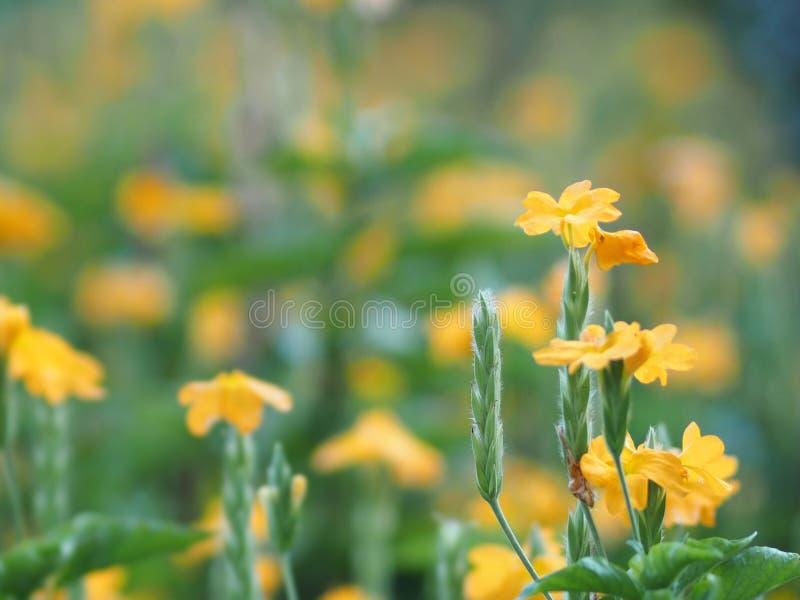 特写镜头黄色花美丽在自然空间为写道 库存图片
