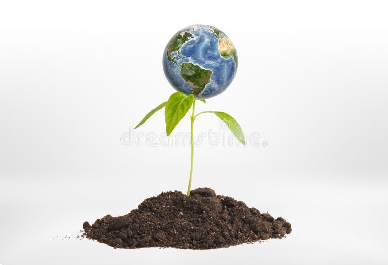 特写镜头在生长从地面的绿色新芽的行星地球 皇族释放例证