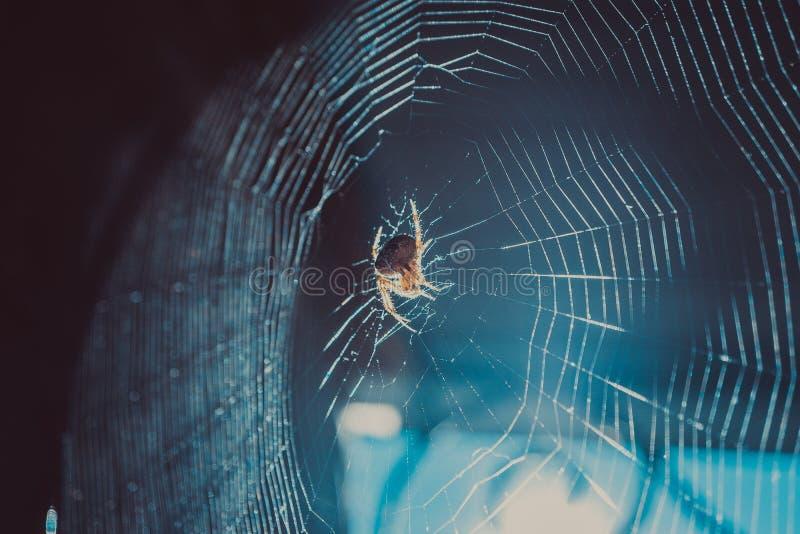 特写镜头在阳光下射击了蜘蛛网和飞行尘土 库存照片