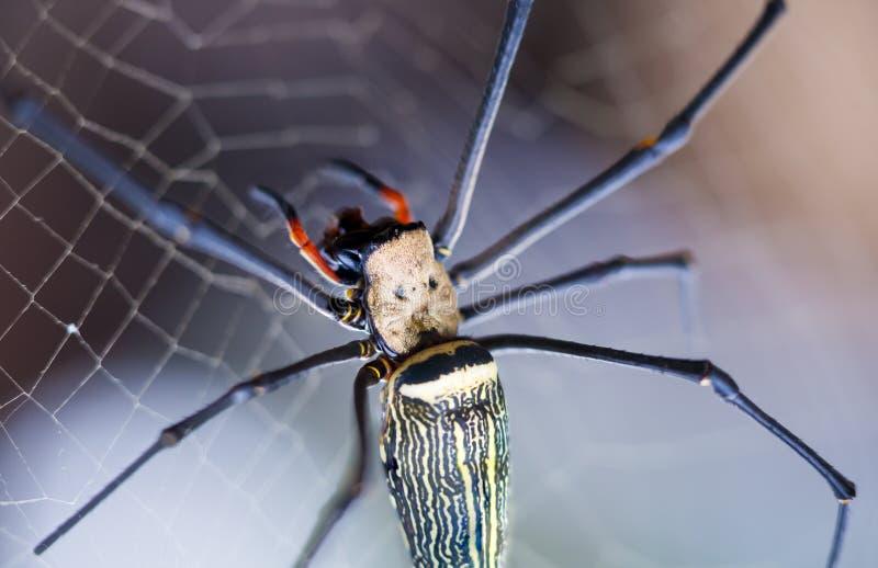 特写镜头-在spiderweb的蜘蛛反对自然bokeh背景 O 免版税图库摄影