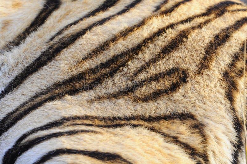 特写镜头孟加拉老虎的毛皮样式 库存照片