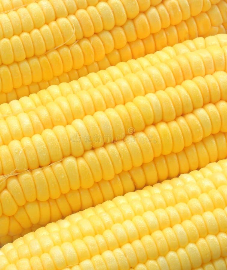 特写镜头成熟玉米 免版税图库摄影