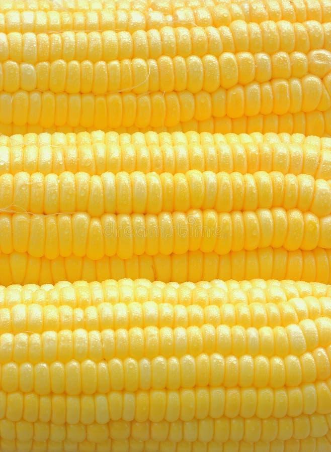 特写镜头成熟玉米 免版税库存图片