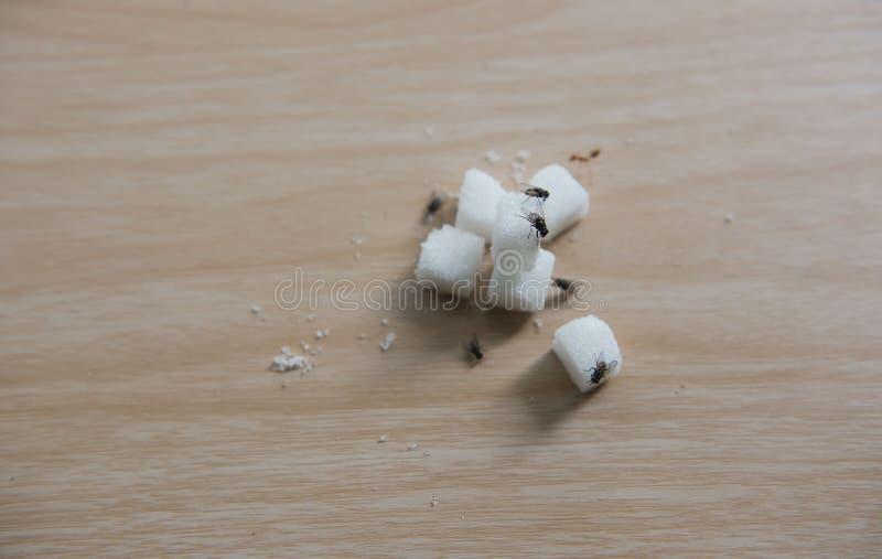 特写镜头方糖和飞行在木桌上 免版税图库摄影