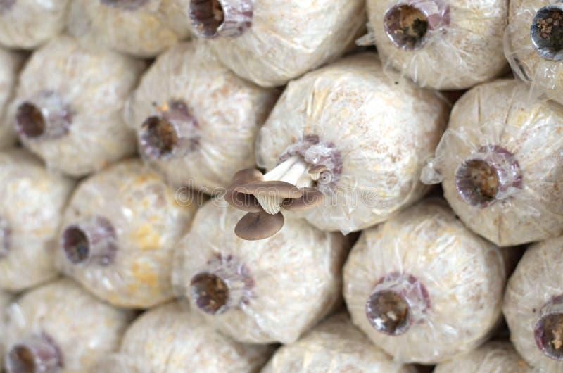 特写镜头有机蘑菇农场 库存照片