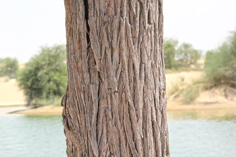 特写镜头被射击树干 免版税库存图片