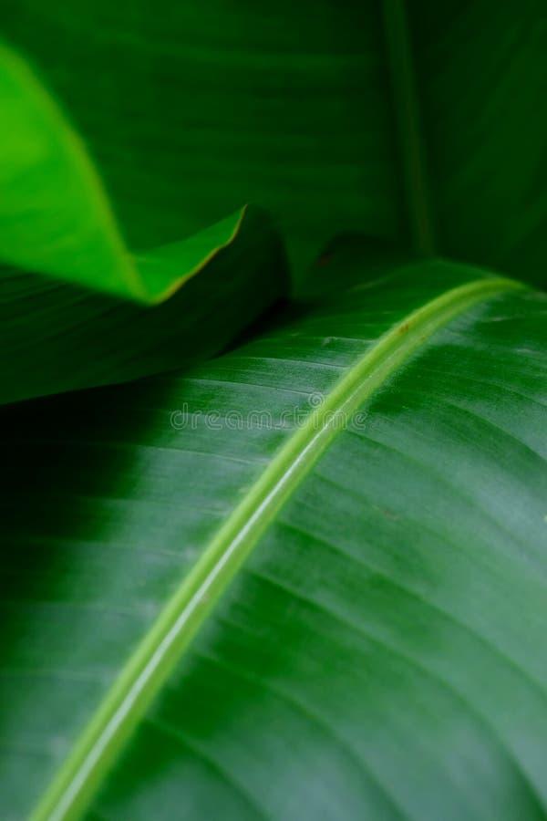特写 热带叶、阴影与光景中的天堂鸟 免版税库存照片