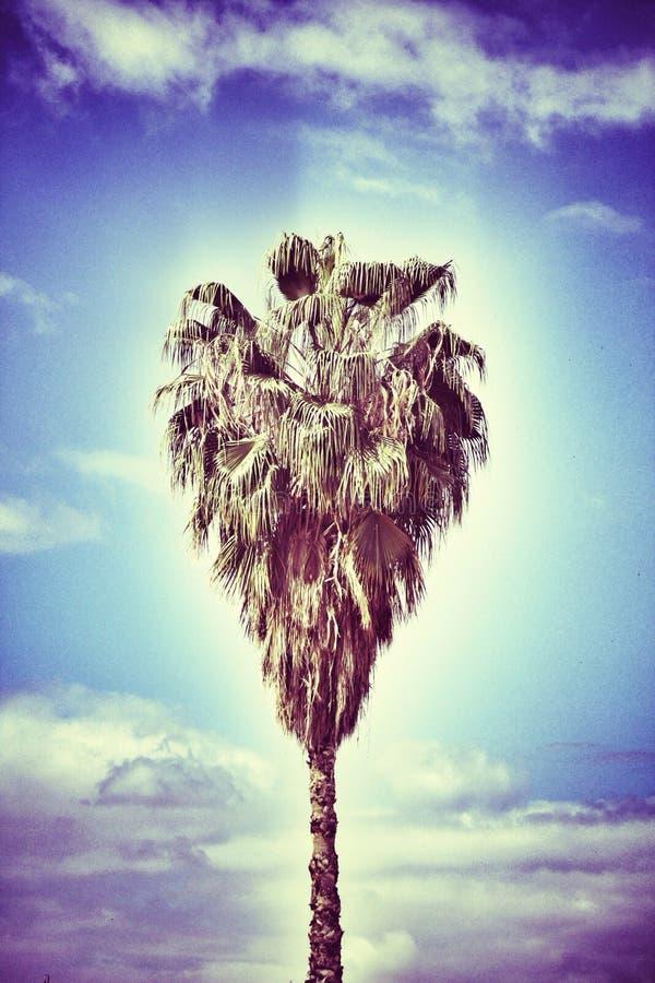 特别心形的palmtree 免版税库存照片