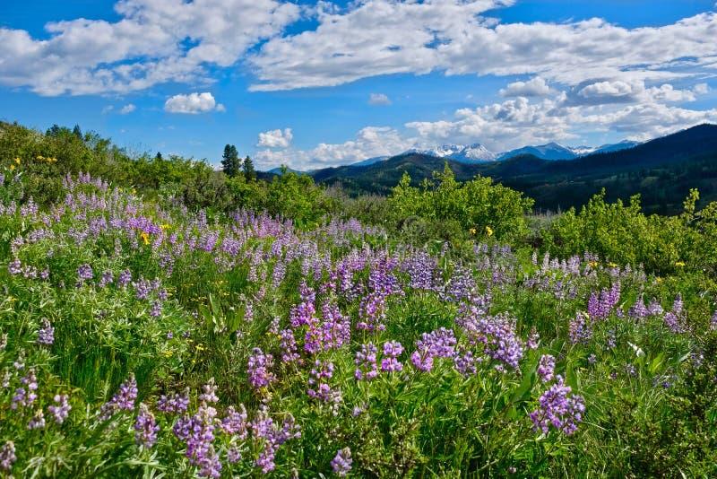 从特森山的绵延山 库存图片