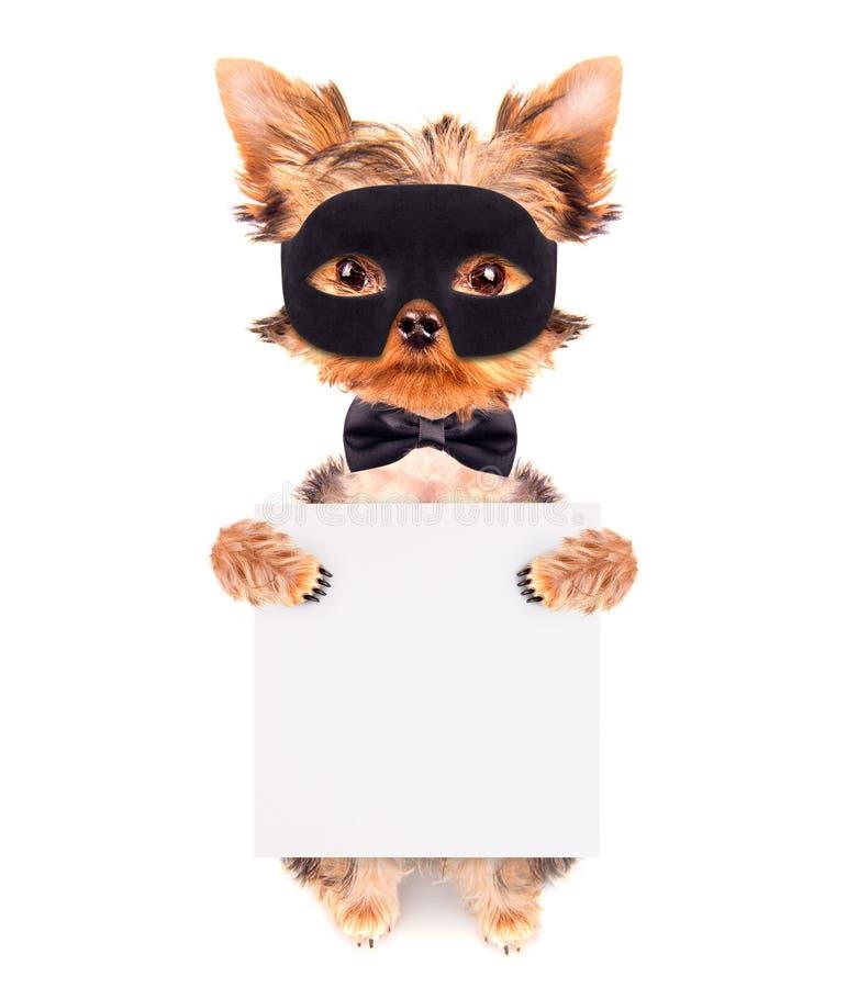 特级英雄小狗 免版税库存图片