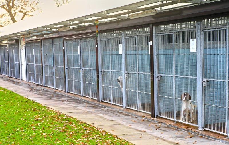 犬拘留所 图库摄影