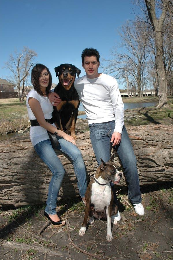犬科纵向 免版税库存图片
