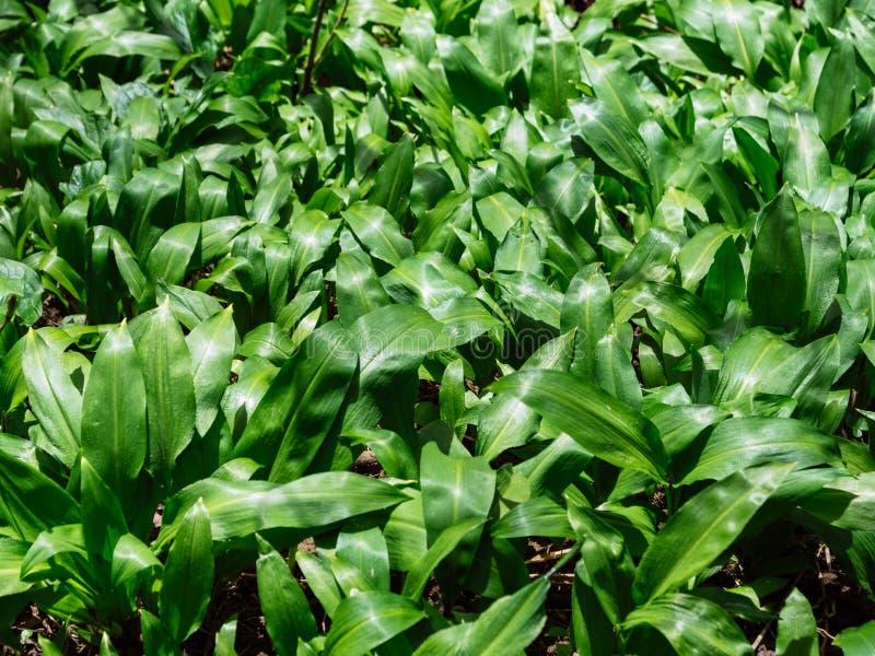 图片 包括有 结构树, 生物, 森林 - 113885155