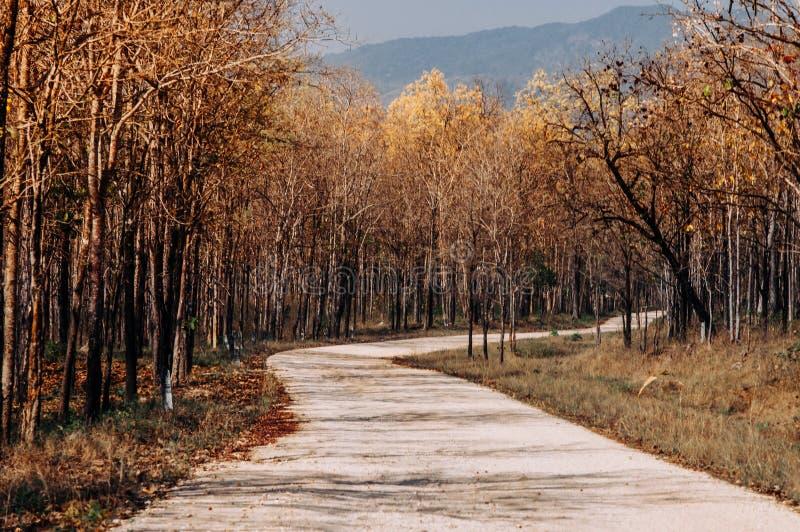 狂放的与树的森林弯曲的农村路场面沿双方 库存照片