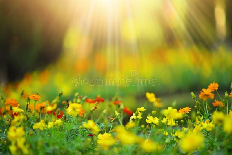 狂放的在早晨阳光背景的草甸美丽的花 Sel 库存照片