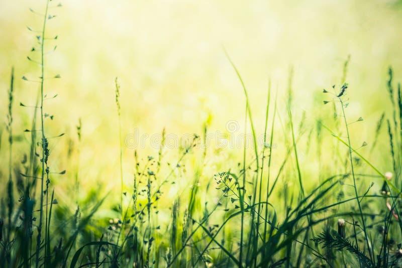 狂放的夏天自然有草背景 库存图片