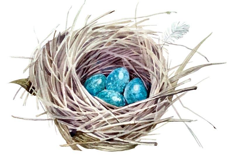 狂放的巢用蓝色鸡蛋 库存照片