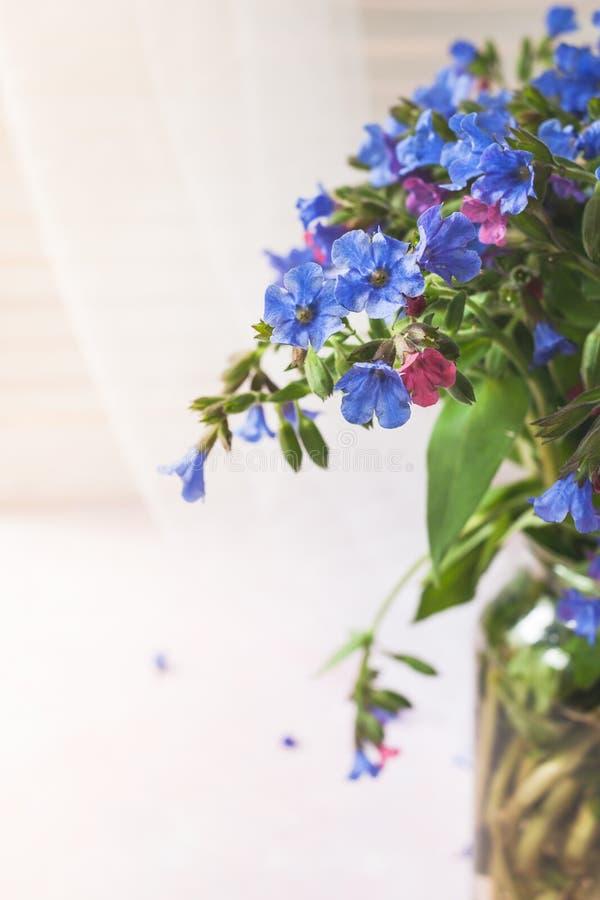 狂放的树木丛生的lungwort花束的特写镜头零件在玻璃花瓶的在轻的背景 库存照片