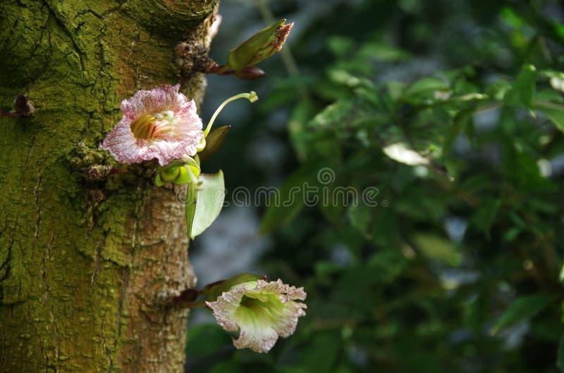 狂放的树花 库存照片