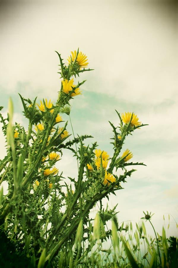 狂放的棘手的植物和花,葡萄酒 库存照片