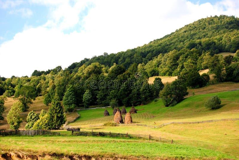 狂放的森林山在罗马尼亚 免版税库存图片