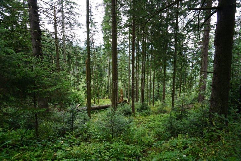 狂放的森林风景,在途中的打破的树 图库摄影