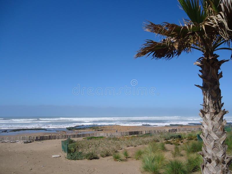 狂放的海滩,卡萨布兰卡,棕榈,纯净的天空,蓝色海洋 免版税库存图片