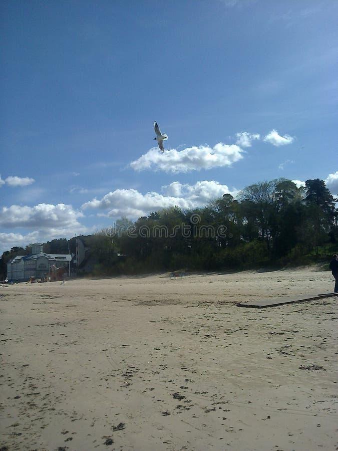 狂放的海滩,在风暴以后 库存图片