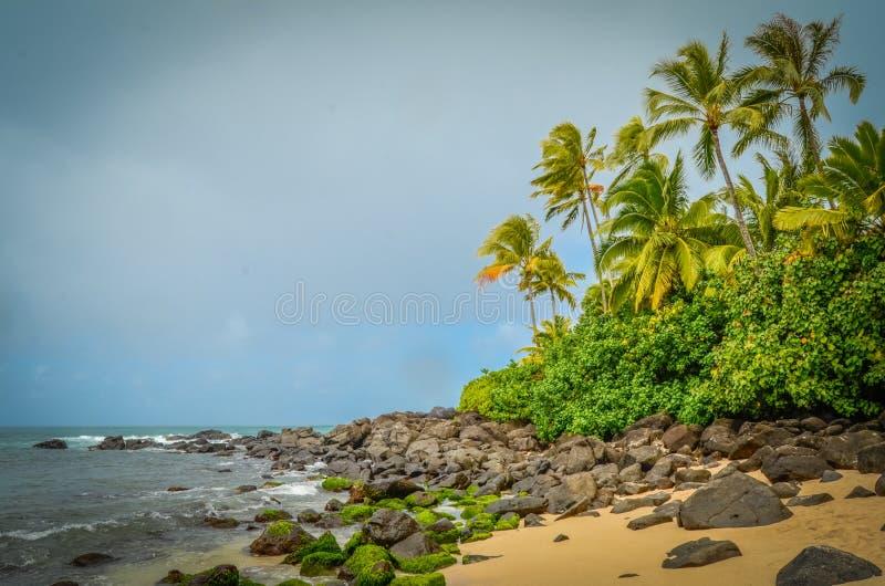 狂放的海滩 库存图片