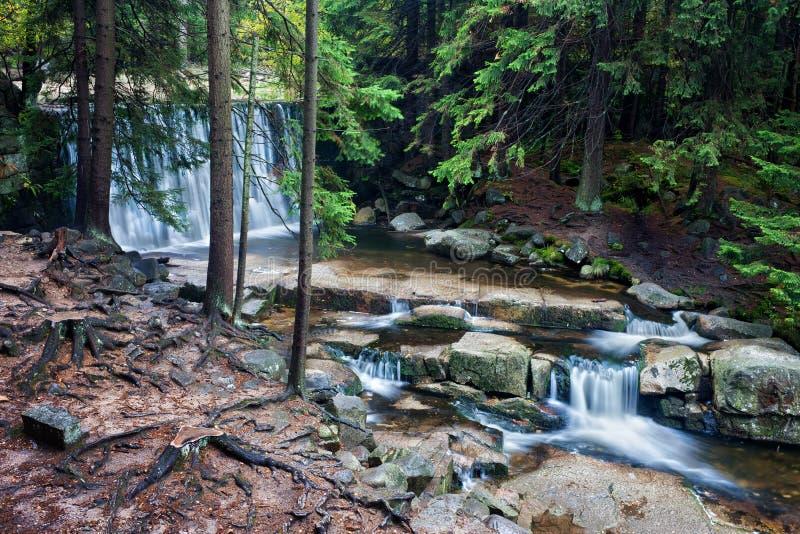 狂放的瀑布在Karkonosze山森林里  免版税库存照片
