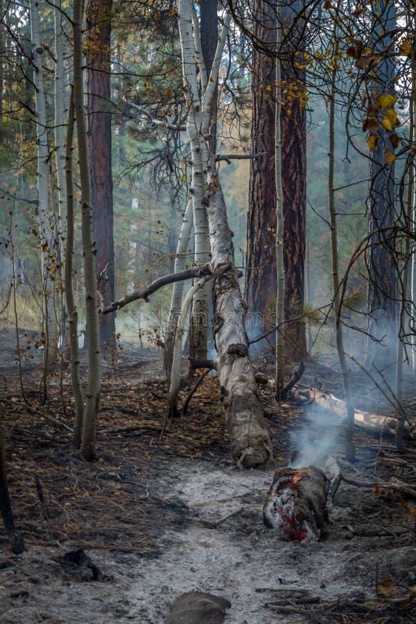 狂放的火在亚利桑那 免版税库存照片