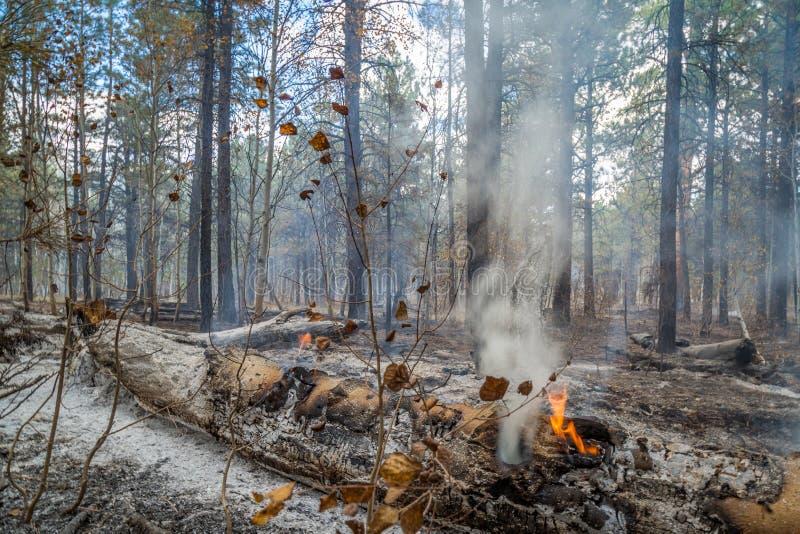 狂放的火在亚利桑那 免版税图库摄影