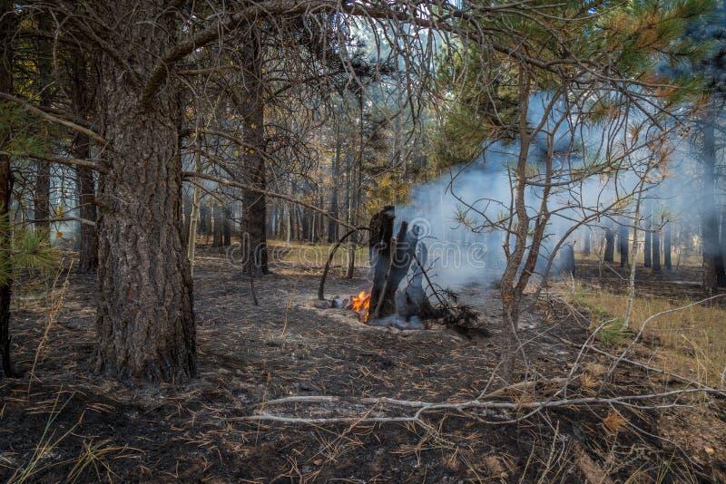 狂放的火在亚利桑那 免版税库存图片