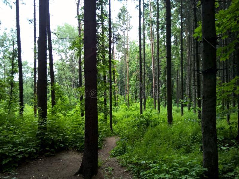 狂放的自然森林,足迹向未知数的海洋 免版税库存照片